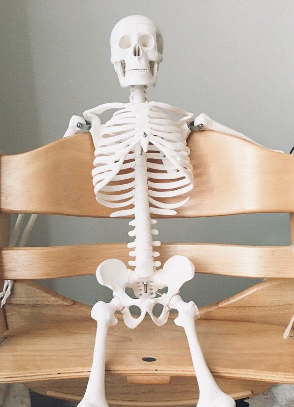 人体骨格模型